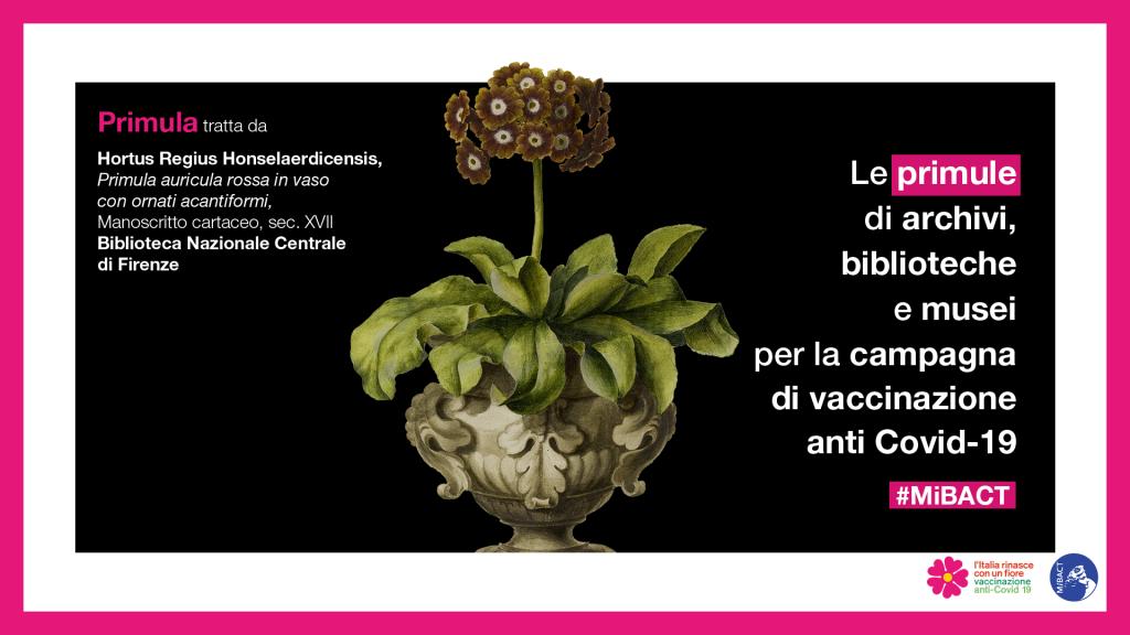 Campagna Vaccino Anti Covid
